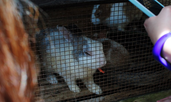 Rabbit at Sta Elena Fun Farm